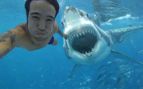 shark photobomb 1