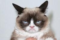 grumpy-cat-worlds-richest-cat