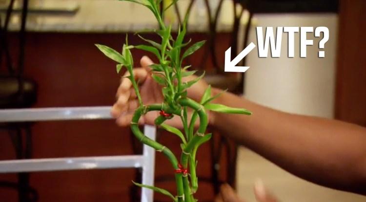 mafs plant wtf