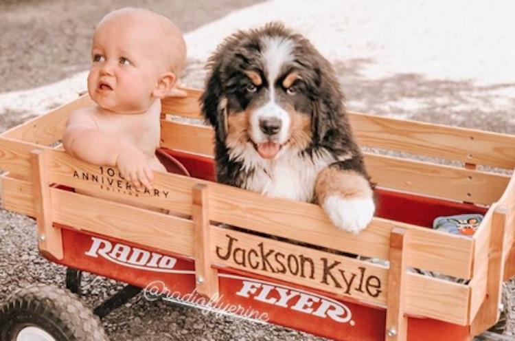 jackson-roloff-murphy-dog-puppy-photos