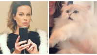 A split image of Kate Beckinsale and her cat