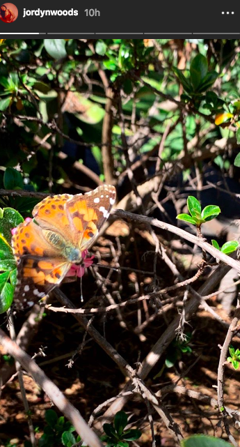 Jordyn Woods instagram story of butterfly at the zoo