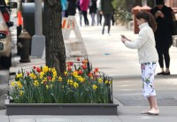 Suri Cruise Taking Pictures of Flowers in NYC