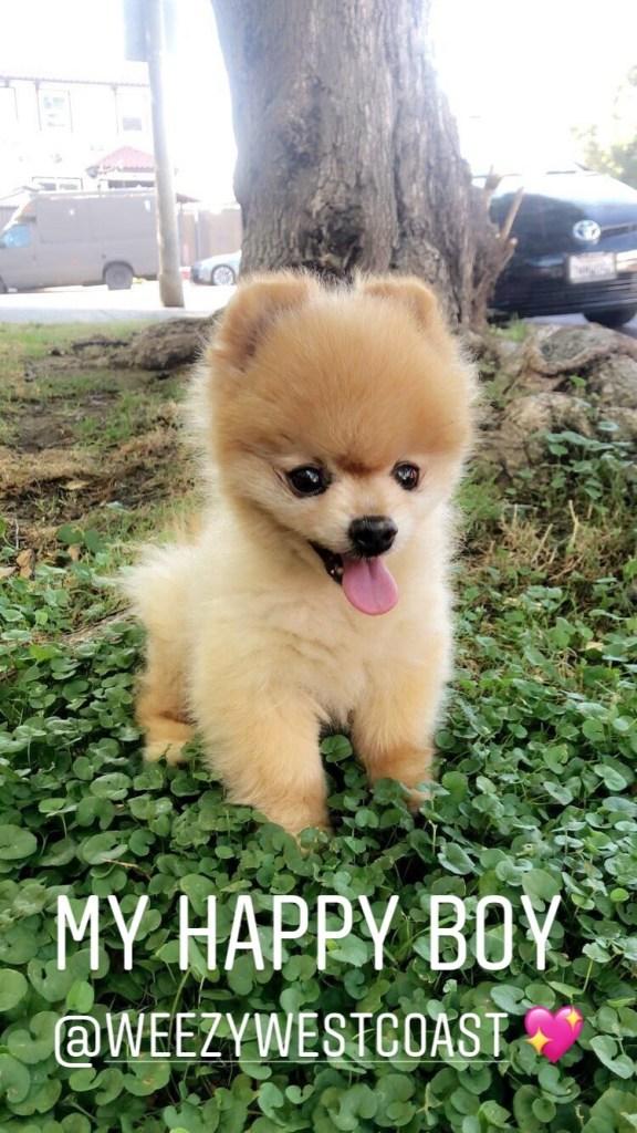 Chanel West Coast Pup