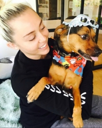Miley Cyrus Dogs Happy