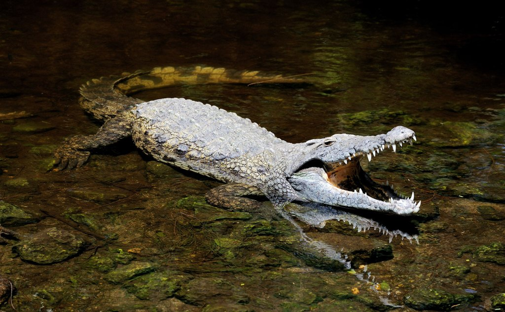 Massive Saltwater Crocodile Attacks Explored in New Special