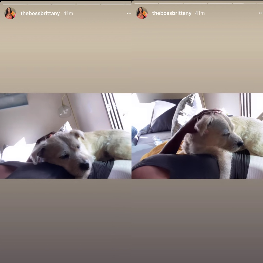 90 day fiance brittany in america with dog max