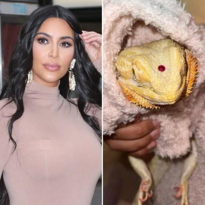 Kim Kardashian Slammed for Putting Jewel on Pet Reptile's Head