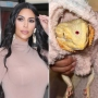 Kim Kardashian Slammed for Putting Jewel on Pet Reptile's Head